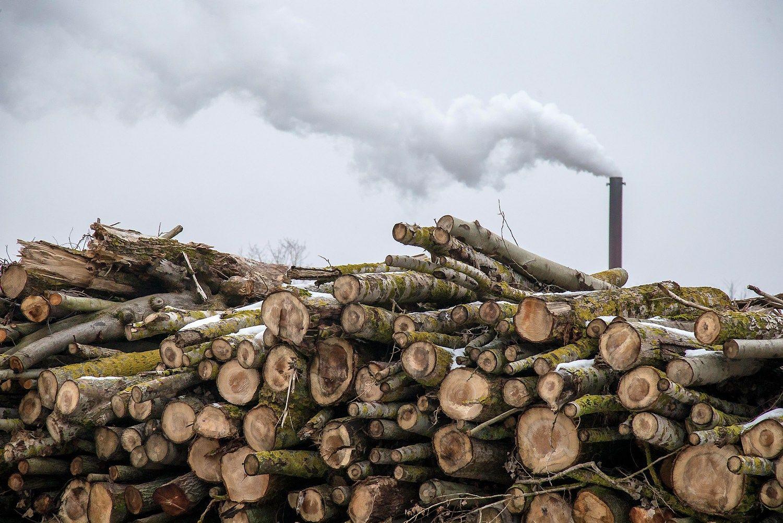 """Mainais į gamyklą """"Kronospan"""" reikalauja miškų nuomos"""