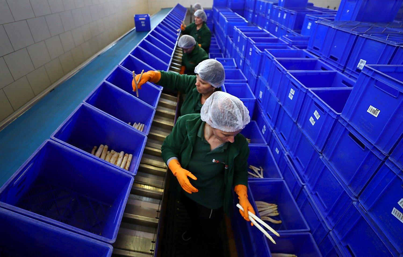 """JK verslo nuogąstavimai dėl """"Brexit"""": dėl darbuotojų stygiaus – kone aliarmas"""