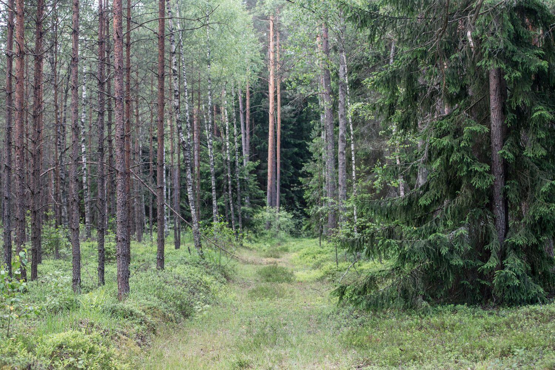 Prasidedanti miškų  konsolidacija – grąžos potencialas