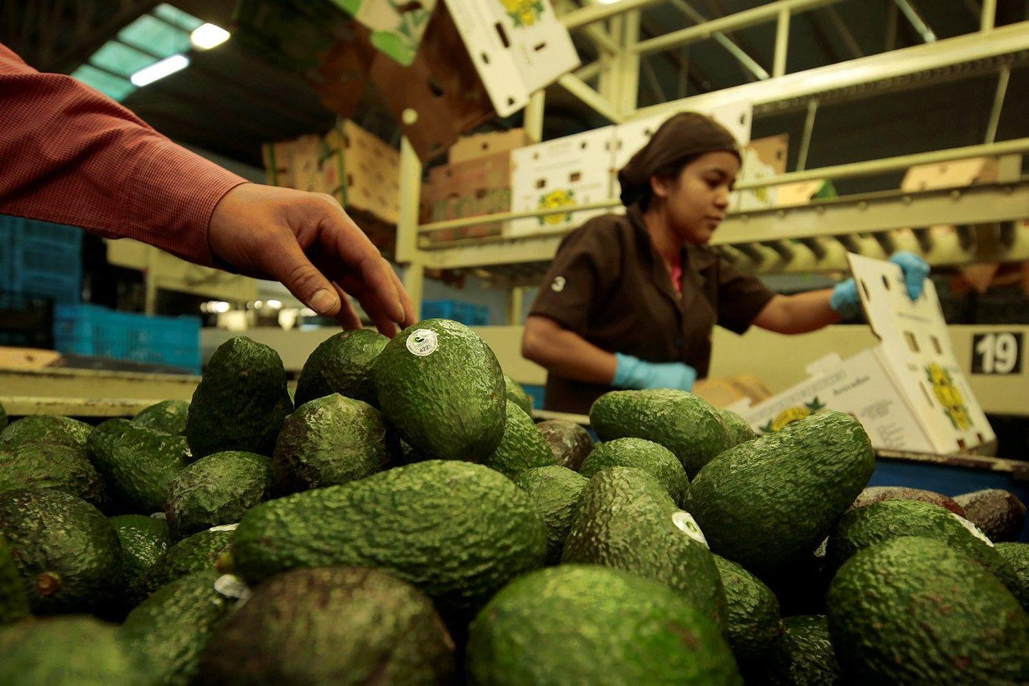 Avokadų kaina kyla į istorines aukštumas