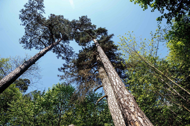 Miškų reforma nenaudinga, ūkyje gausu neišnaudotų galimybių