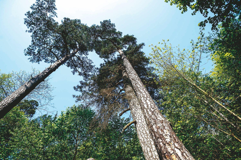 Urėdijų reforma: iš Miškų įstatymo pataisų ekspertizės – tik šnipštas