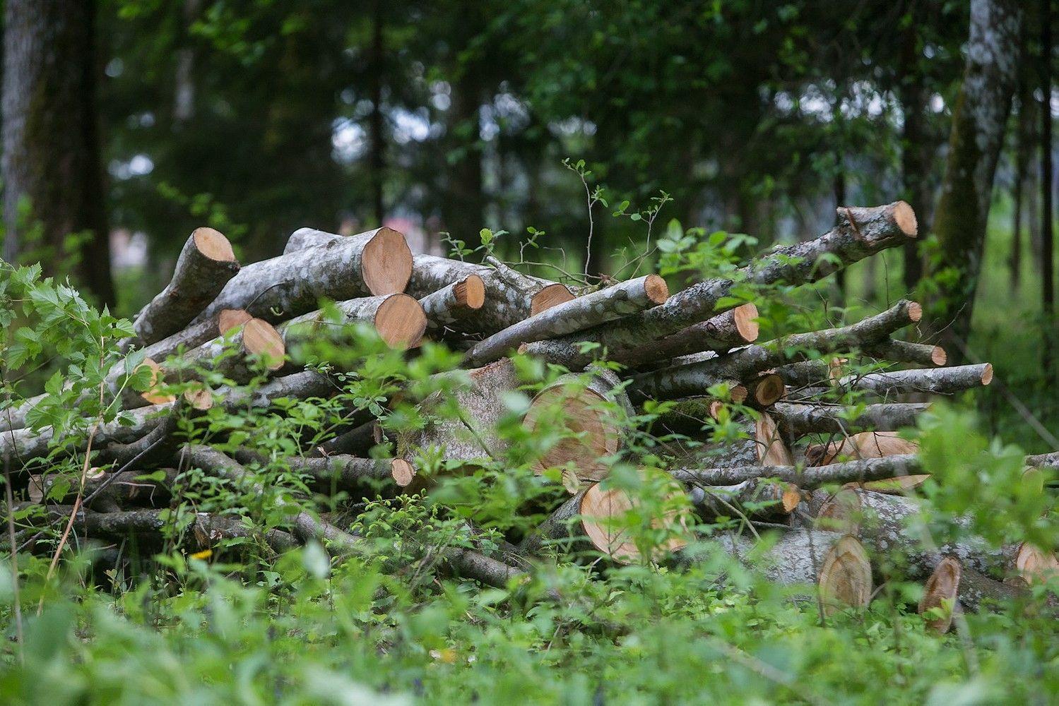 """INVL Asset Management"" miškų fondas pritraukė 5 mln. Eur"