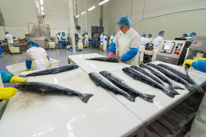 Kelmė vilioja investuotojus:iš žuvų odos gali būti gaminamas audinys