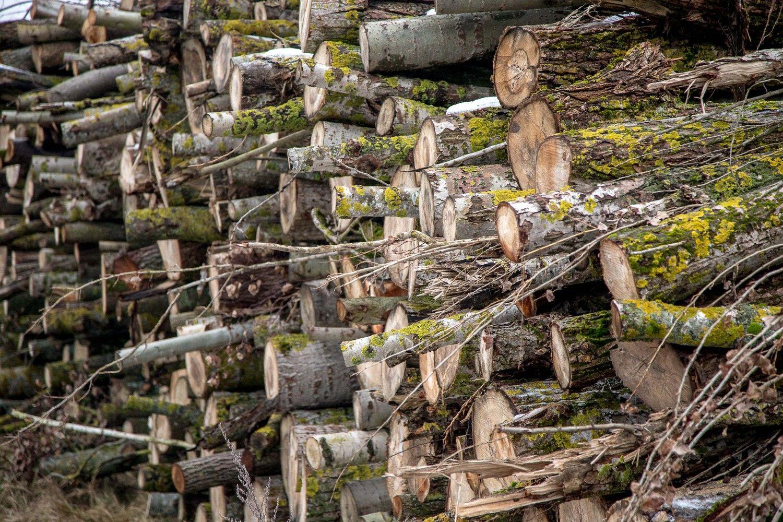 Birža taikosi tapti biokuro eksporto įrankiu