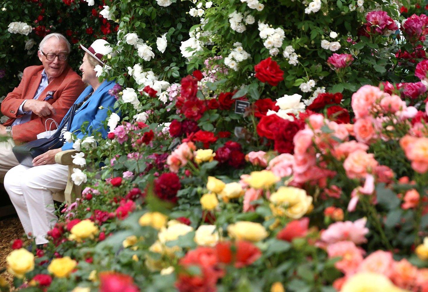 Londone vyksta garsioji Čelsio gėlių paroda