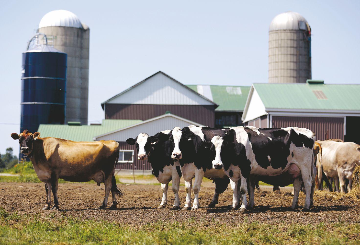 JAV ir Kanada pliekiasi dėl pieno