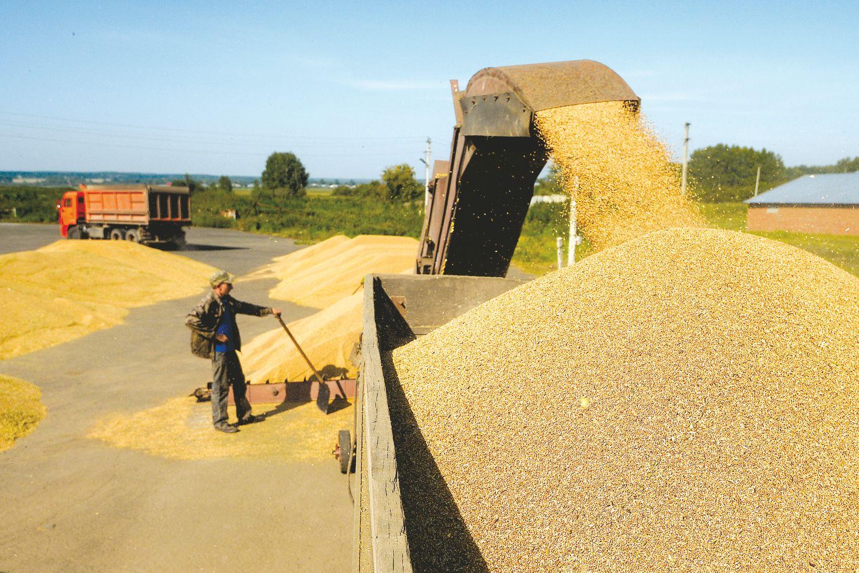 Kviečių eksportas: viskas verčiasi aukštyn kojomis
