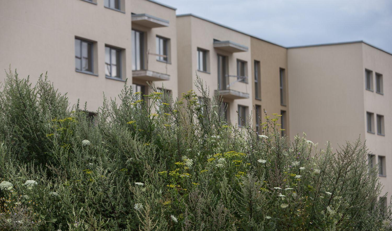 VMI nuskenavo būsto nuomosskelbimus – 17 mln. Eur nesumokėtų mokesčių