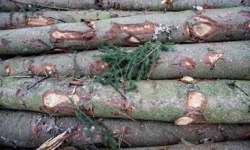 Jordanija neįsileido radioaktyvios medienos iš Lietuvos