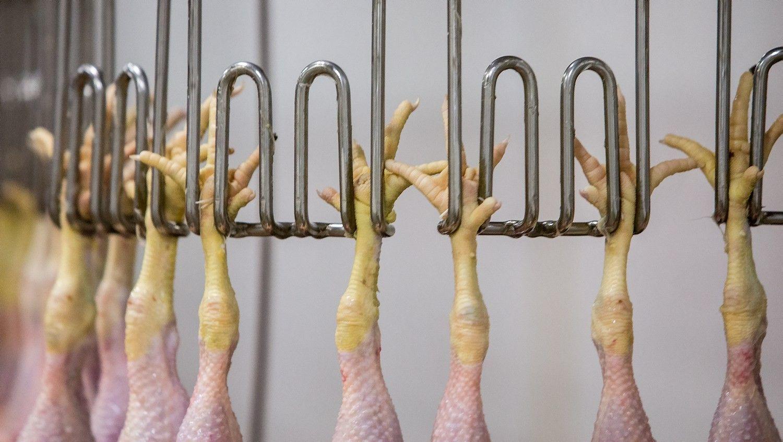 Mėsos pramonė: tarp investuotojų paieškos ir eksporto proveržio