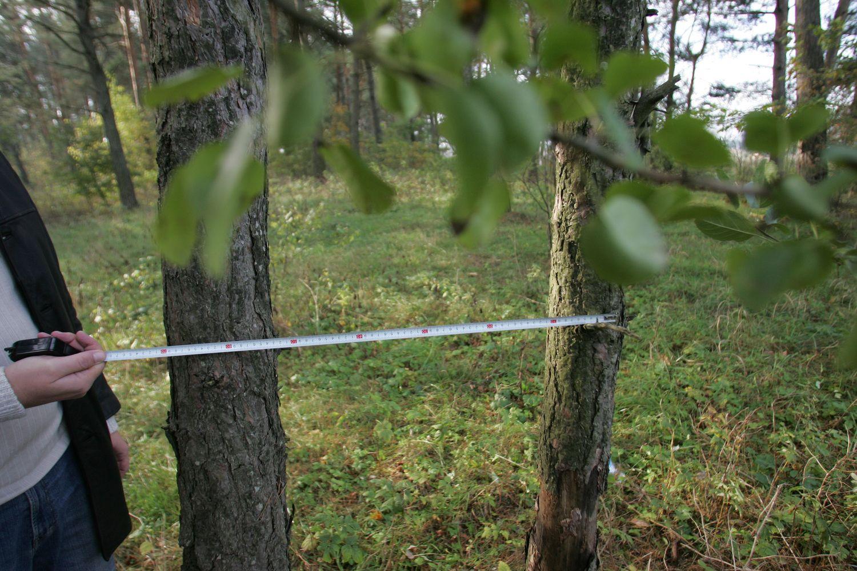 Kelias į EBPO driekiasi ir per miškus