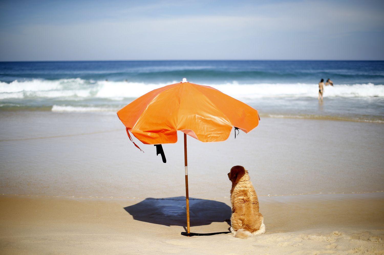 Panaikintas draudimas į paplūdimį vestis gyvūnus