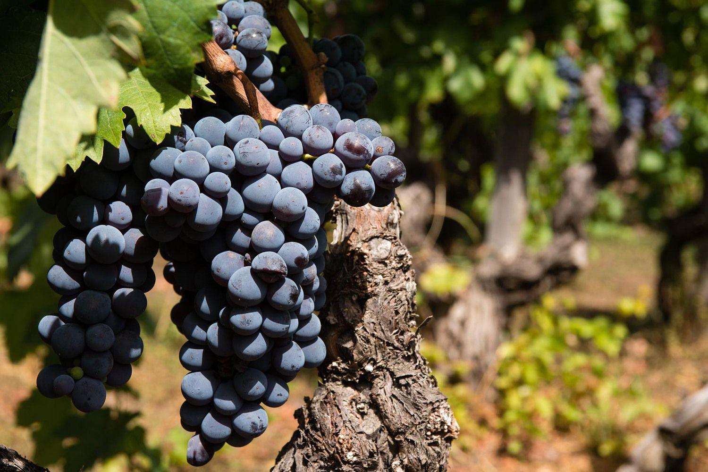 Itališki vynai: kai vertė viršija kainą