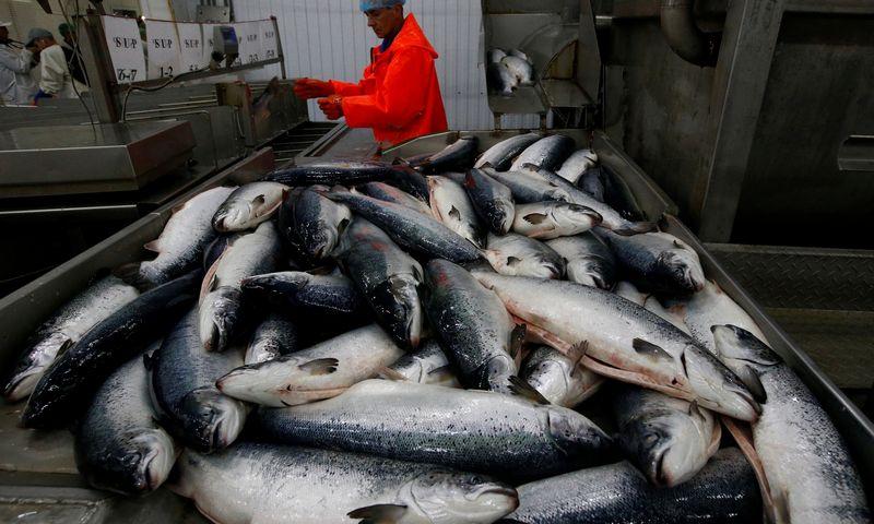 """Rusijos žuvų auginimo pramonė per trejus metus gamybos apimtį padvigubino. Sergejaus Karpuchino (""""Reuters"""" / """"Scanpix"""") nuotr."""