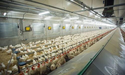 """""""KG Group"""" atidarė paukščių auginimo kompleksą"""