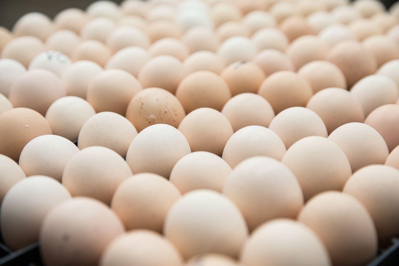 Pesticidu užteršti kiaušiniai Lietuvąpasiekė, bet į maistą nepateko
