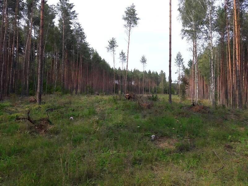 Suniokotas miškas Alytaus rajone prikeltas antram gyvenimui