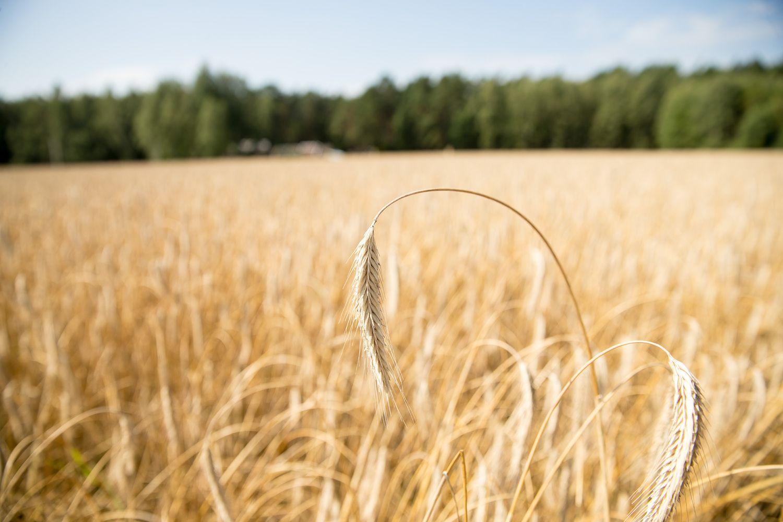 Seime – žemės ūkio paskirties sklypų įsigijimo pakeitimai