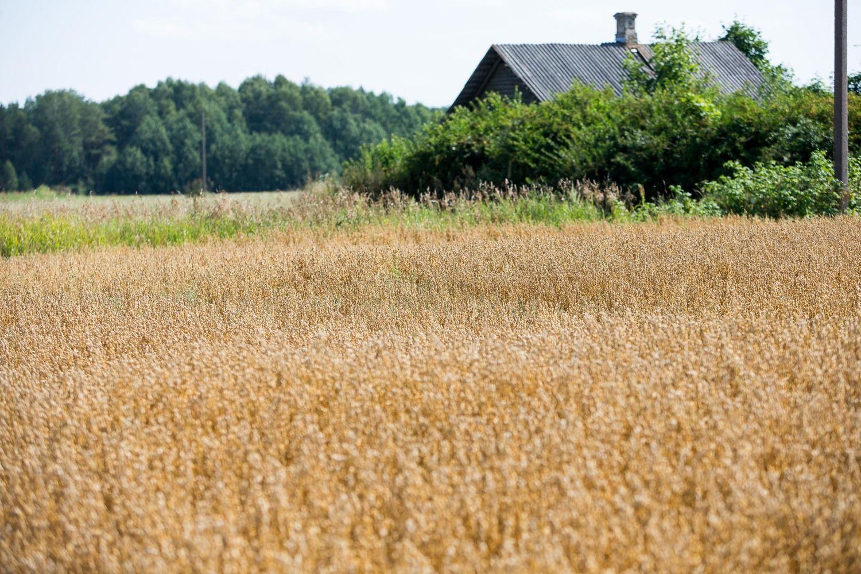 Dėl pagalbos Lietuvos ūkininkams planuoja kreiptis į EK
