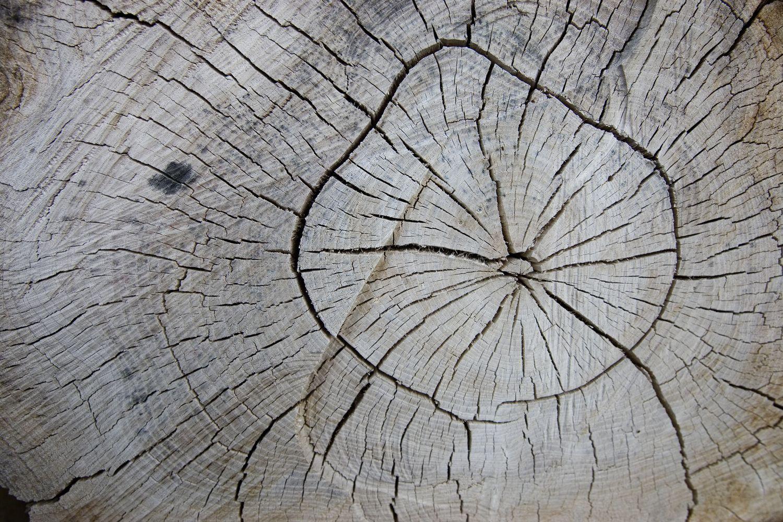Iliustruotasis mokslas: medžiai išduoda kosminį chaosą
