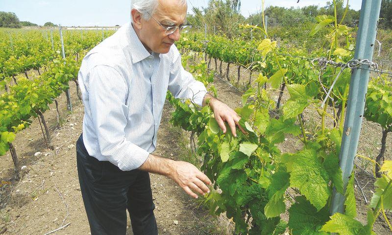 """Sebastiano di Bella, Sicilijos ūkininkų asociacijos prezidentas, įsitikinęs: """"Šalies vardui rinkose įtvirtinti reikia 10 metų didelių pastangų."""" Gabijos Karlonaitės nuotr."""