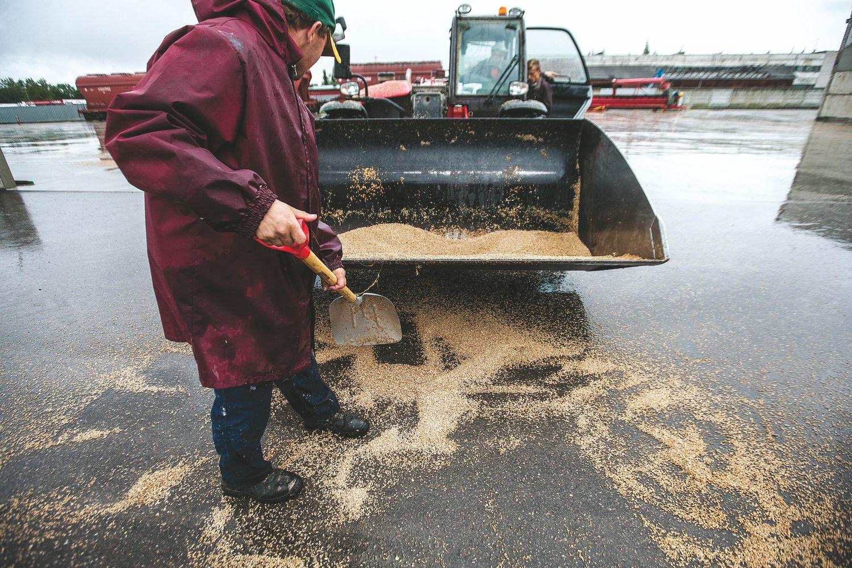 Ūkininkų nuostoliai dėl lietaus – kalta ne vien gamta