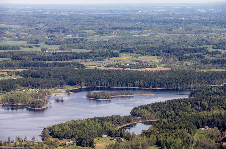 Naftą keičia mediena: galimybė Lietuvos miškams