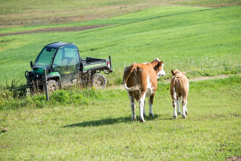 Perdirbėjai pradėjo derybas su ūkininkais: už pieną mokės mažiau
