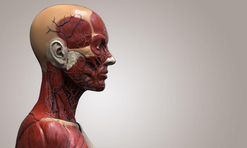"""Savo ar artimųjų kūną mokslui po mirties paaukoję amerikiečiai dažnai nežino, kad jis atsidurs prekeivių rankose.  """"Mattonstock.com"""" nuotr."""