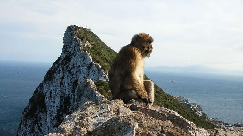 Vaizdas nuo Gibraltaro uolos viršaus. Pauliaus Čiulados (VŽ) nuotr.