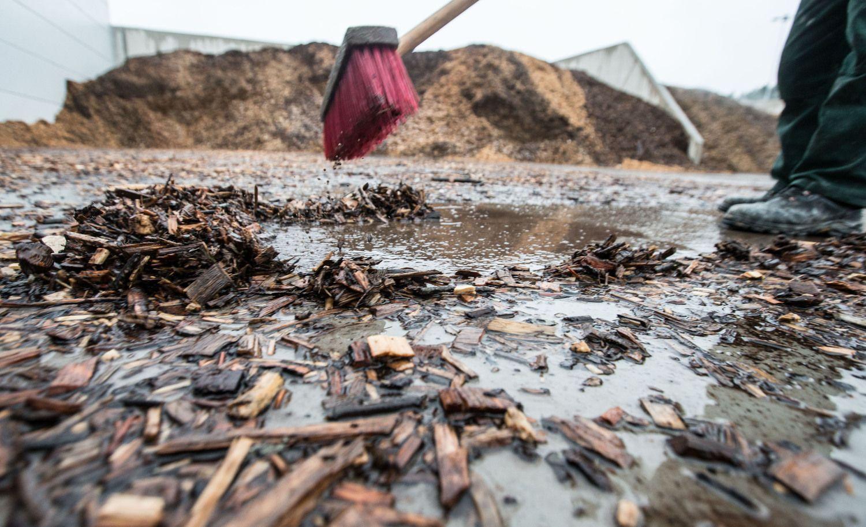 Baldų pramonės ir biokuro plėtra augins žaliavos kainas