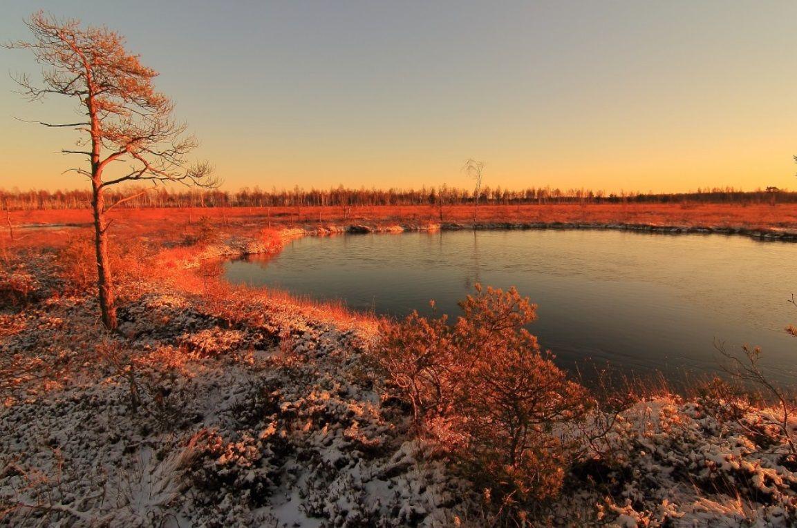 Žiemos pramoga – žygiai į pelkes ir raistus