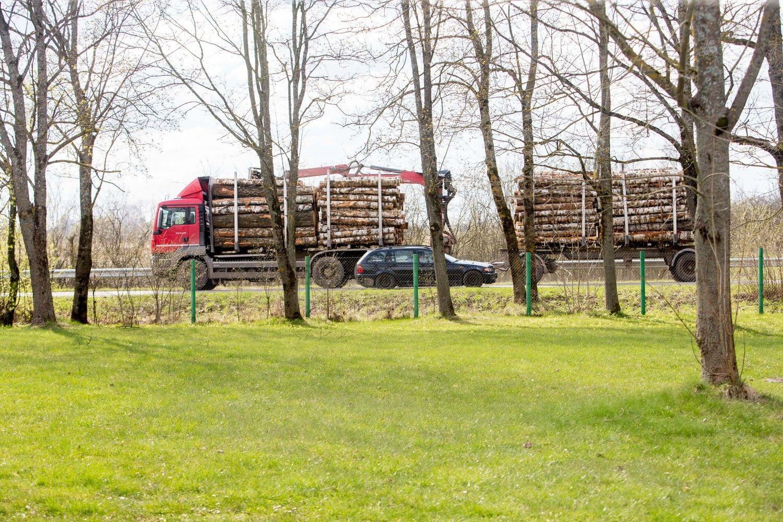 Medienos kainas pašokdinoįmirkę miškai ir latviai