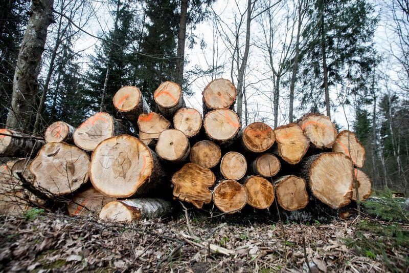 """Biokuro biržą administruojanti """"Baltpool"""" pradiniame etape nuo sausio perims operavimą prekybos valstybine mediena sistema AMEPS iš naikinamos Generalinės miškų urėdijos. Juditos Grigelytės (VŽ) nuotr."""