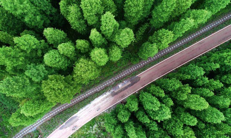 Miškas Kinijos Jinhu nacionaliniame parke.  Sipasia / Scanpix nuotr.