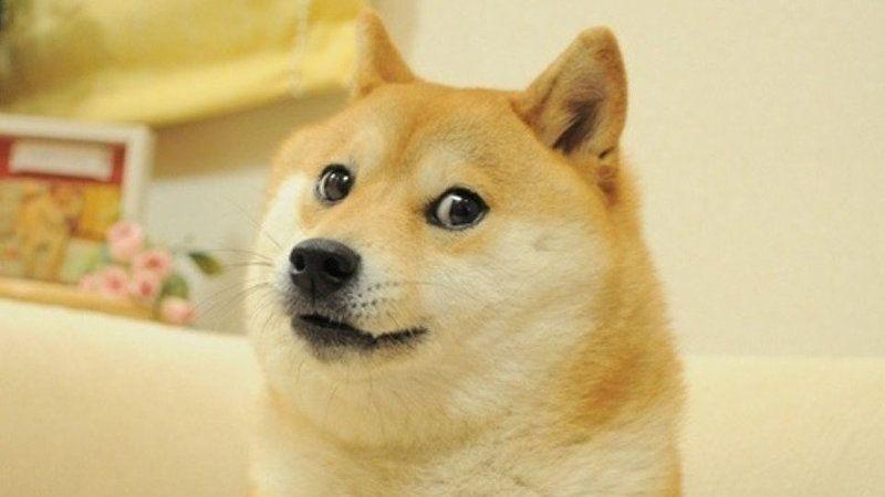 """Kriptovaliutos pamatinė idėja - intereto memai, kurių herojus """"Shiba Inu"""" veislės šuo. """"knowyourmeme.com""""."""