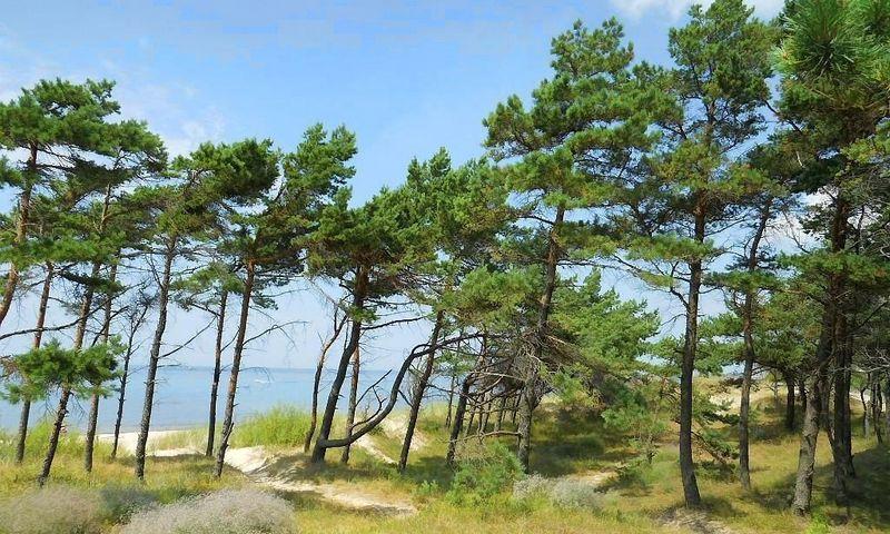 Baltijos jūros pakrantė prie Kulikovo kaimo Kaliningrado srityje. kaliningrad.wie.su nuotr.