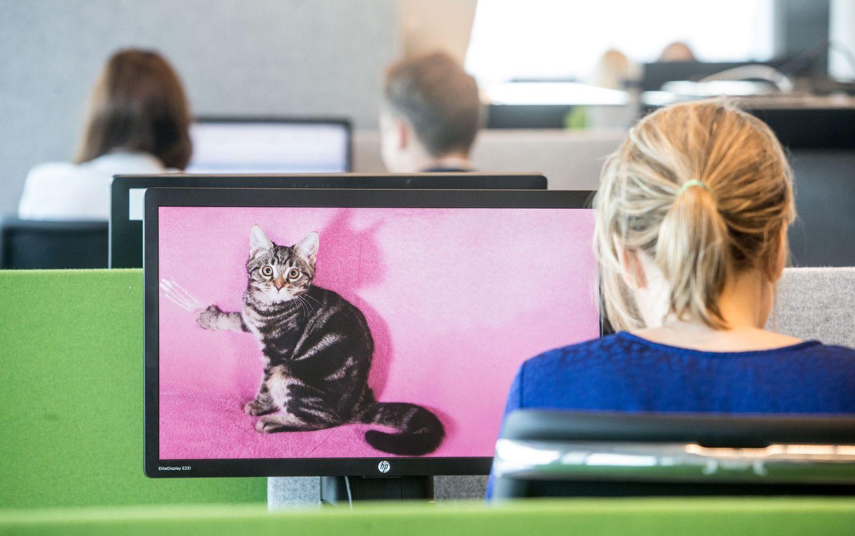 """Darbuotojų lojalumui skatinti ir darbdavių įvaizdžiui stiprinti – """"Katino dienos"""""""