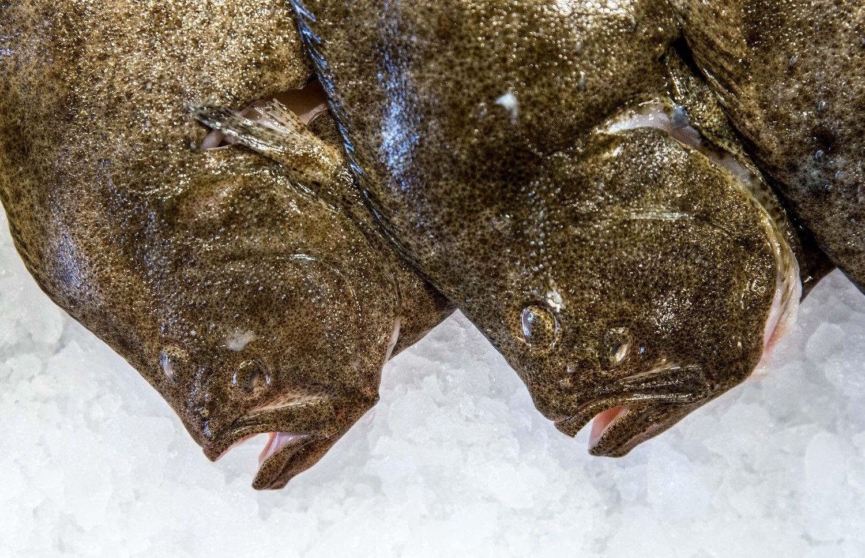 Patikrinimų rezultatai: parazitais užteršta žuvis, pesticidai, nelegalūs ingredientai