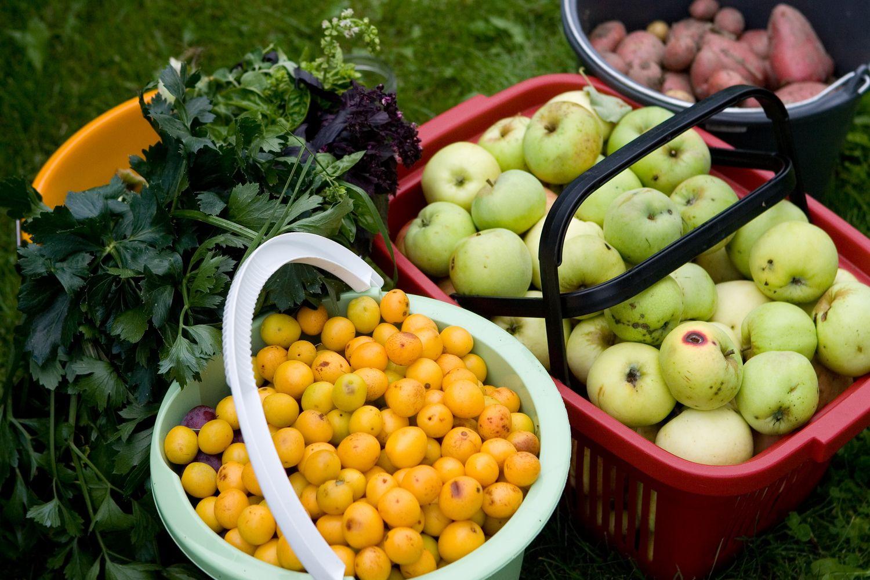 Žemės ūkio produkcijos supirkimo kainos: labiausiai brango vaisiai ir avižos