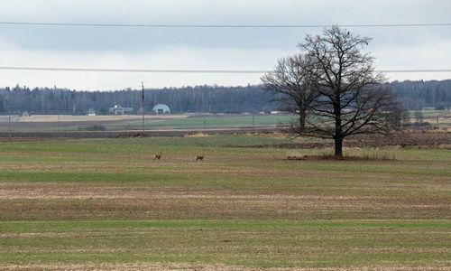 Seimas susiginčijo, ar reikalinga speciali komisija padėčiai žemės ūkyje