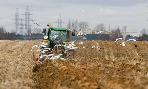 Kritikuoja ES subsidijų sistemą: taip žalojama laukinė gamta