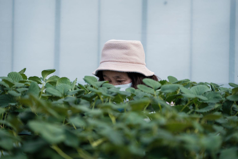 Demografijos iššūkiai Japonijoje: senukai vagia, kad galėtų gyventi kalėjime