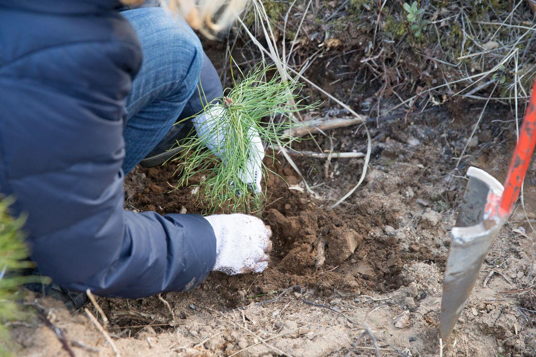 Alternatyva ūkininkams – 10 mln. Eur paramos skiria miškų želdinimui