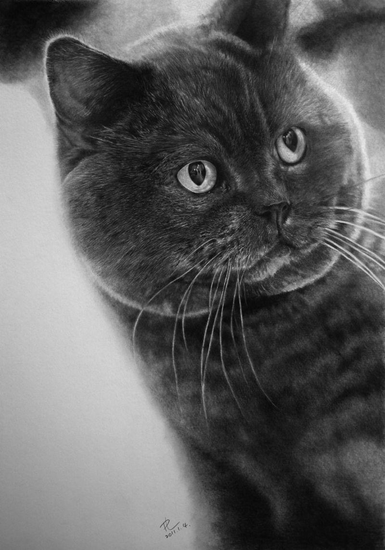 """Katinai komunikuoja sudėtingą pranešimą, kuriame yra žodžiai """"idiotas"""", """"vaikų darželis"""", """"aš šito nepamiršiu"""". Paulo Lungo pieš."""