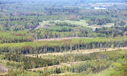 Nelengvins gyvenimo miškingoms savivaldybėms, nes įžvelgia piktnaudžiavimą