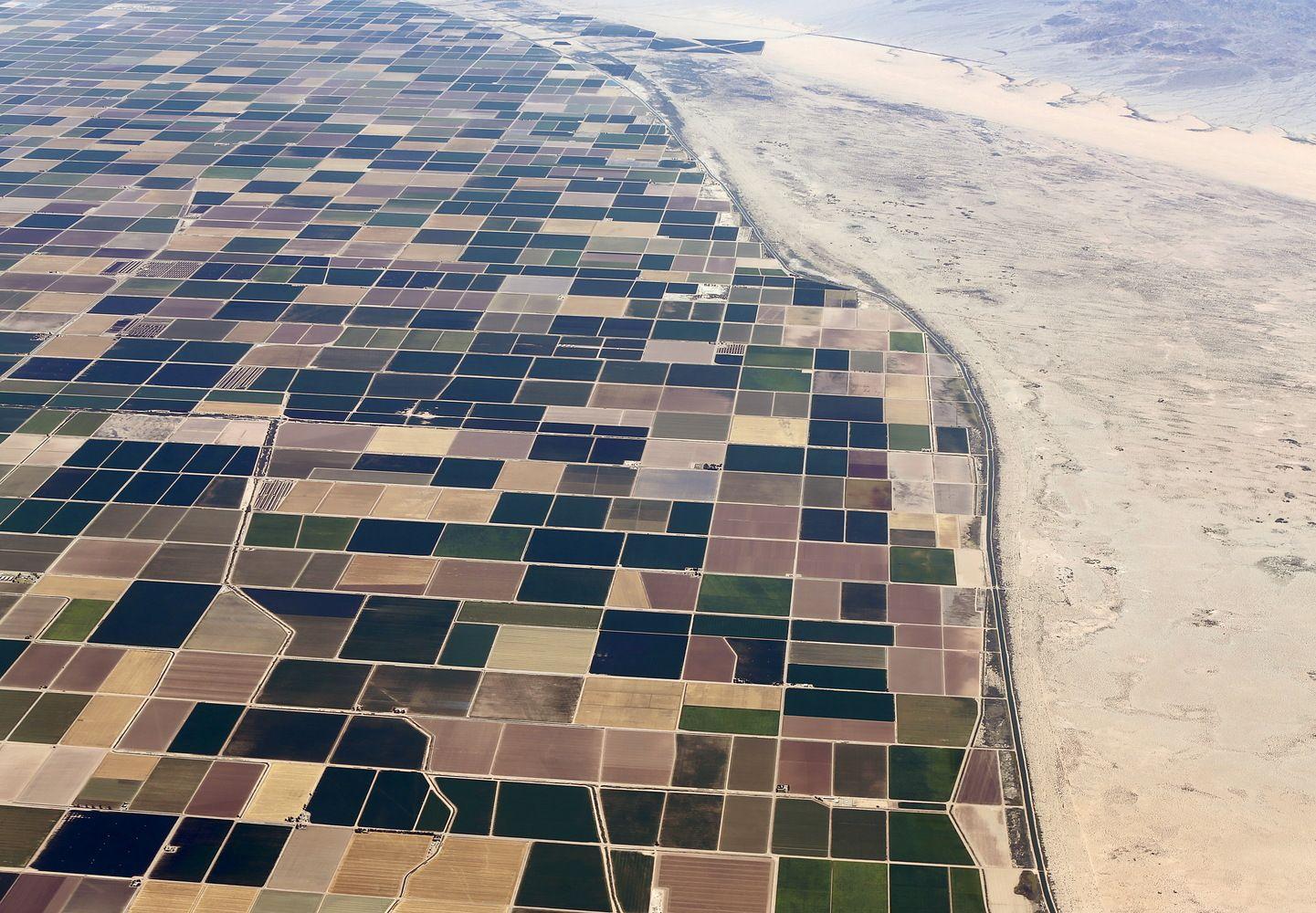 JAE ūkininkas dykumos smėlį sugebėjo paversti derlinga žeme