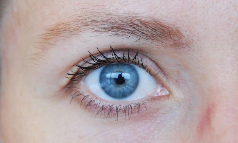 """""""Experimentica Ltd"""" kuria oftalmologinius modelius, skirtus kuriamų vaistų poveikio efektyvumui tirti.  Vladimiro Ivanovo (VŽ) nuotr."""