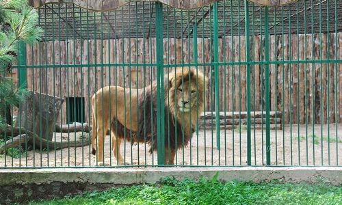 Po teismo svarsto perimti Zoologijos sodo rekonstrukcijos pirkimą